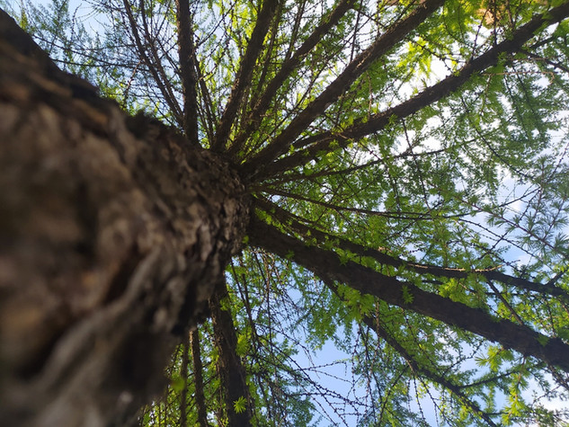 Дерево ветки небо