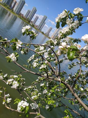 Город озеро цветы