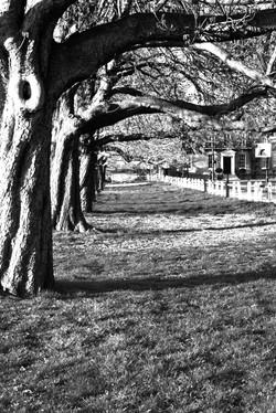 Bushy Park, Hampton Court