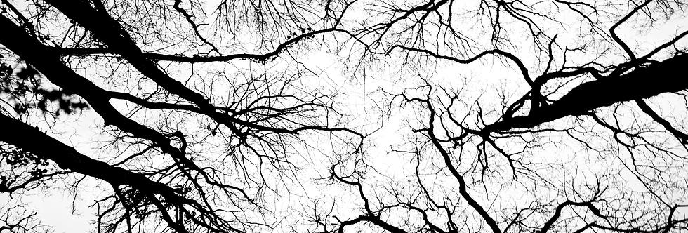 VEINING TREE'S
