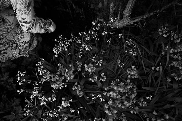 Flowers.tif