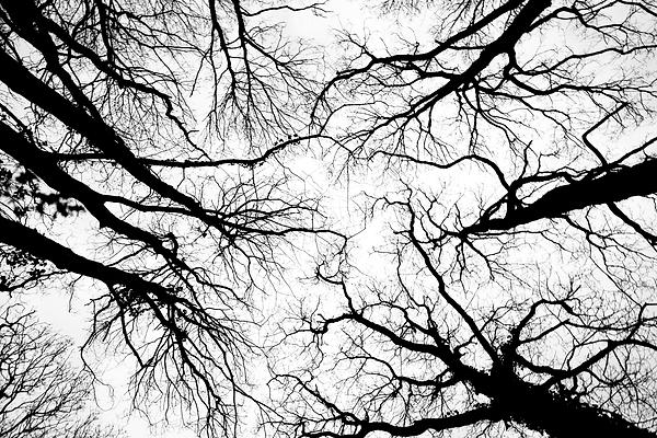 Looking up.tif