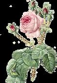 rosarosa.png