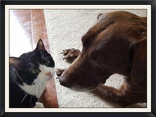 43123 Cat Sitter