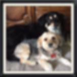 Grove City doggy daycare