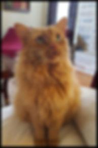 catsitter
