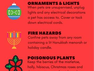 6 holiday season Pet-Safety tips
