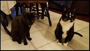 43123 cat sitters