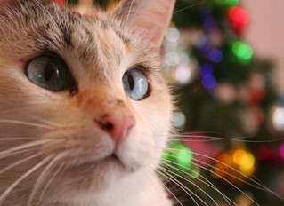 6 Tips to Pet Proof Your Christmas Tree