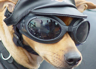 Pet travel and safety tested products you need to know about