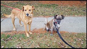43123 dogwalkers