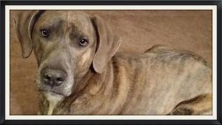 43123 doggie daycare