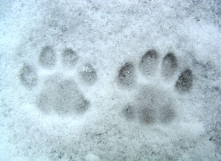 10 Tips to prepare your pets for the winter months