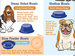 The Right Bowl for Your Pet