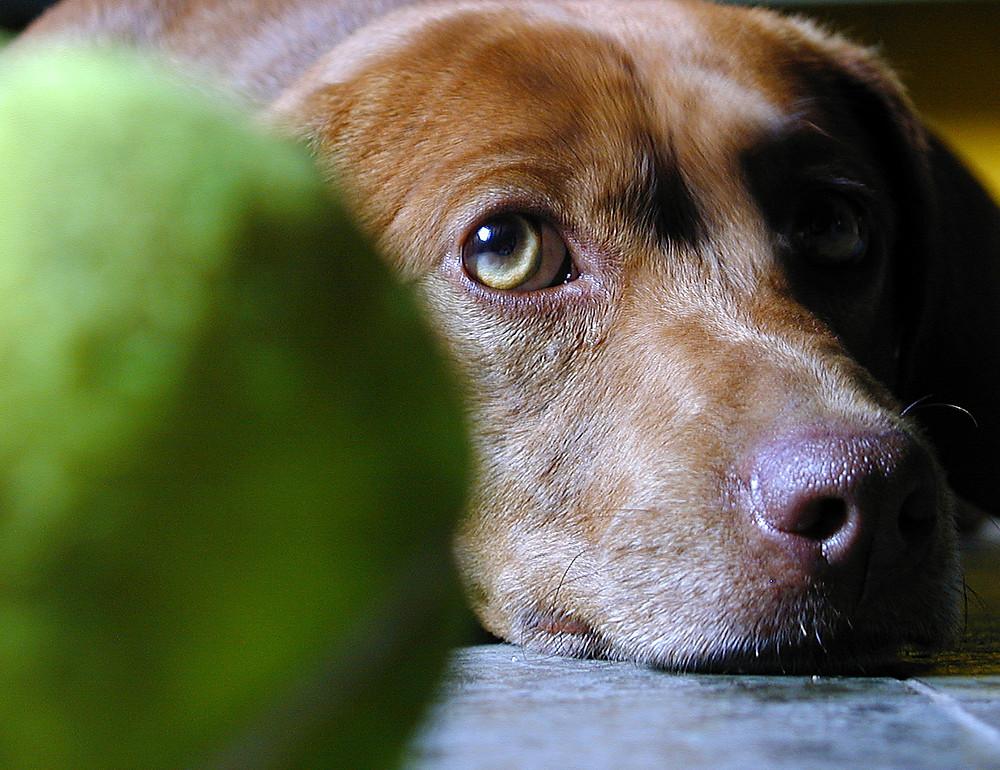 Dog sitter games
