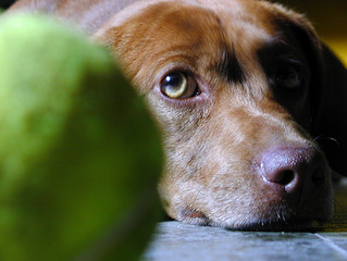 Indoor games for you and your dog