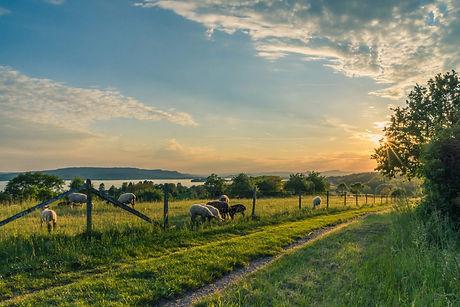 countryside-cropland-dawn-158179.jpg