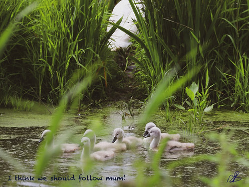 I think we should follow mum!