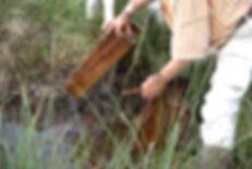 Immersion des pièces de harpe celtique historiques dans la tourbe riche en silice