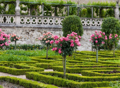 Our  Top 5  Gardens