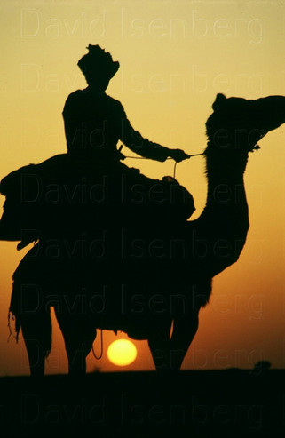 Camel Rider at Sunset, Rajasthan, India