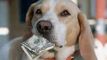 dog and money.jpg