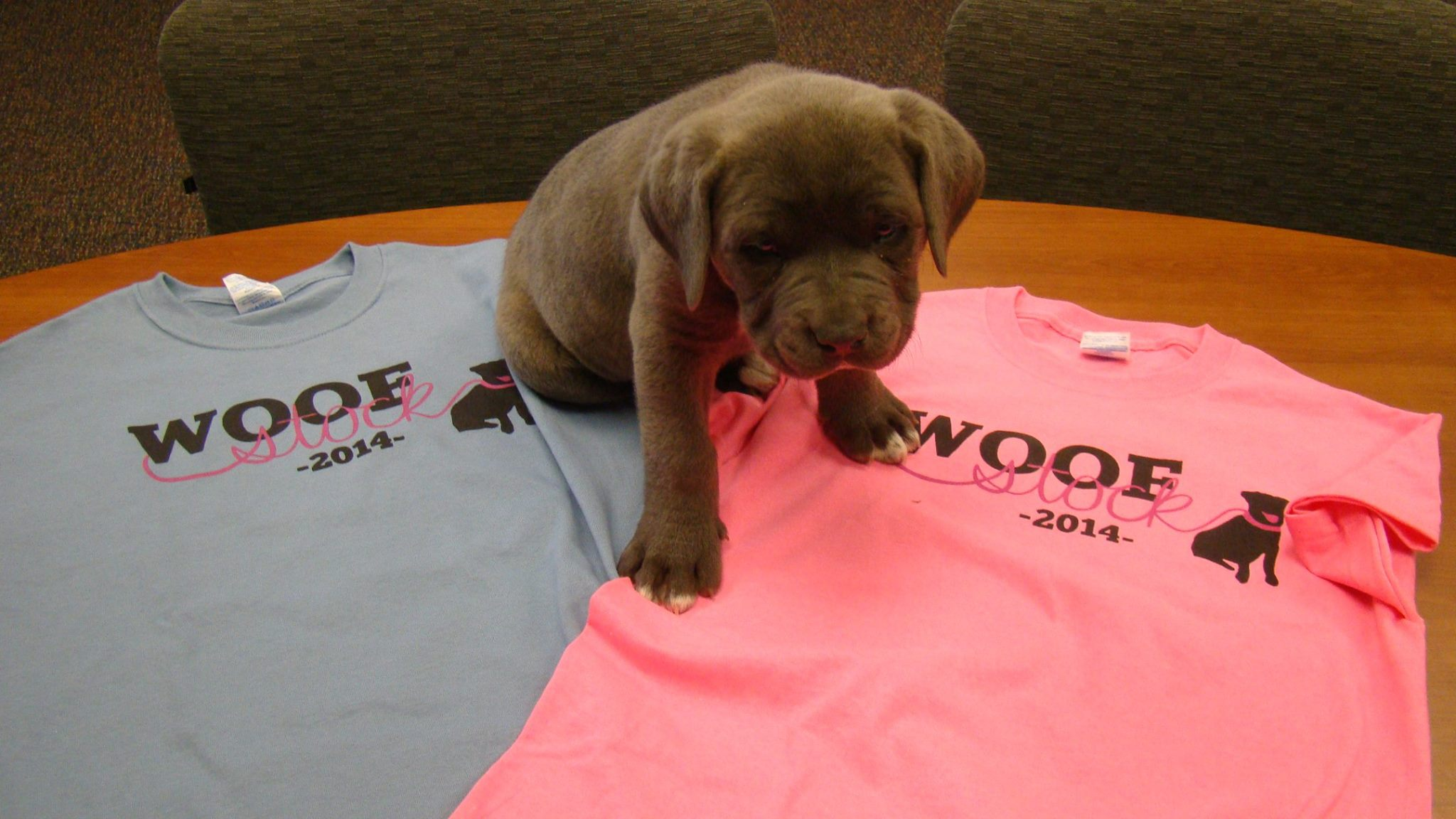 Puppy & Woofstock shirts