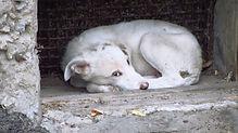 sad dog-abuse.jpg
