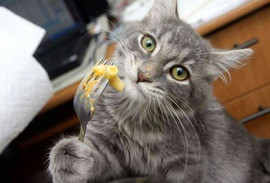 cat-eating-pasta-viral.jpeg
