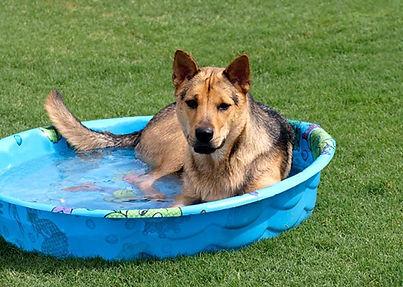 dog in water.jpg