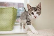 adopt a cat.jpg