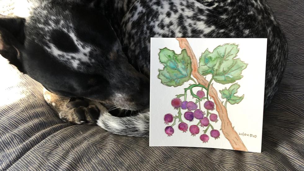 """custom fruit or vegetable watercolor (8x8"""")"""