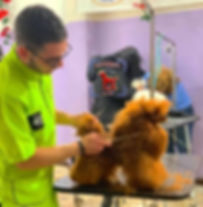 cuccioli e coccole mentra toeetta un model dog ad un corso ti grooming professional