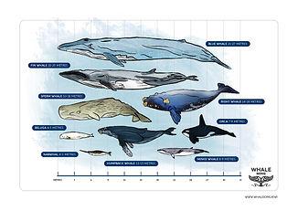 Whale scales.jpg