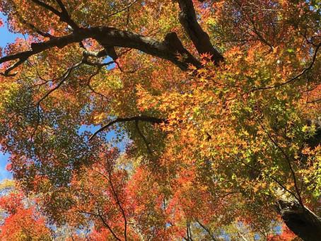 十一月〈霜月〉 November / Shimotsuki