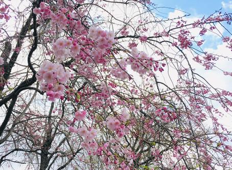 四月〈卯月〉 April / Uzuki