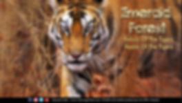 Screenshot 2020-04-16 at 5.03.15 PM.png