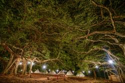trees plus tents