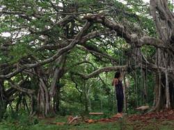 retreat trees