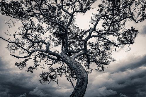 Hey, a tree!