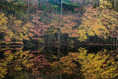 Autumn on Sibley Pond