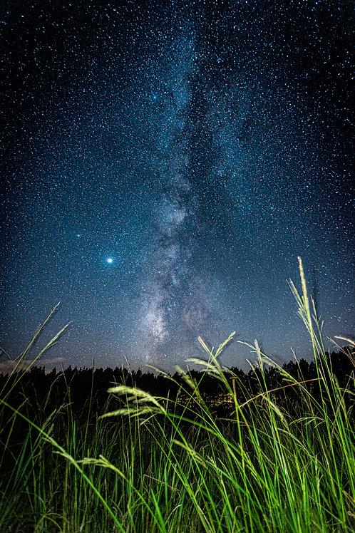 Willd Grass Under a Wild Sky
