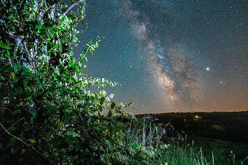 Honeysuckle Milky Way