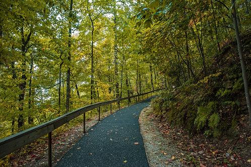 Amicolola Falls Path