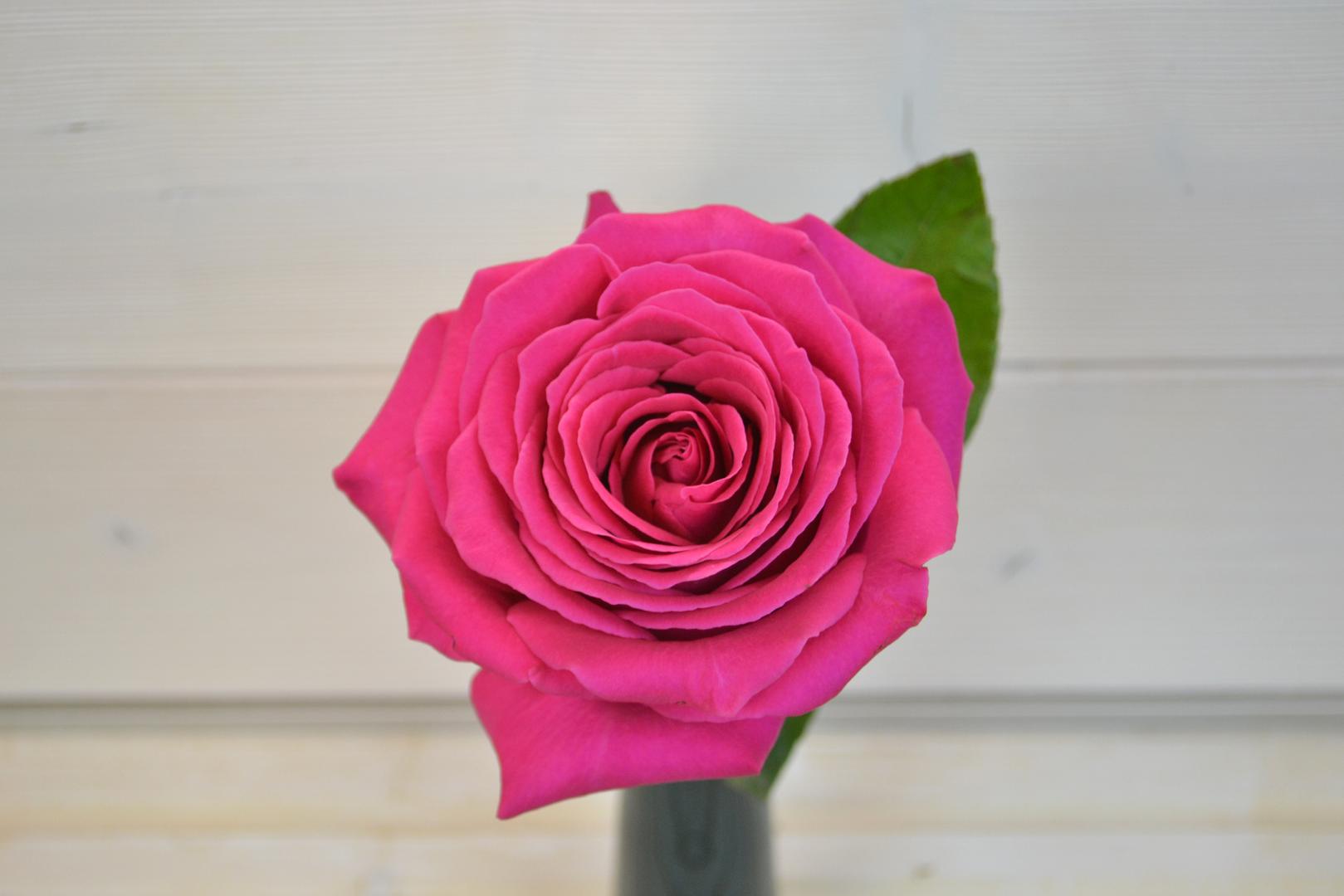 pinkfloyd1.png