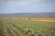 Wegro Farming land Hluhluwe