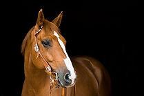 horse-3390256_640.jpg