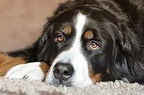 dog-2668993_640.jpg