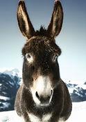 donkey-3619022_640_edited.jpg