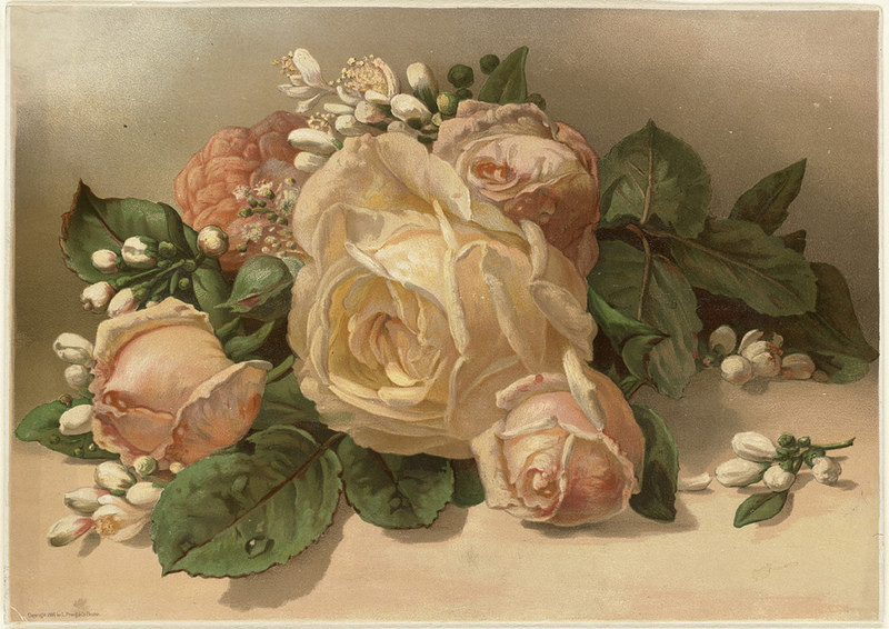 A Victorian-era print of a bouquet of roses. (Photo: Boston Public Library/CC BY 2.0)